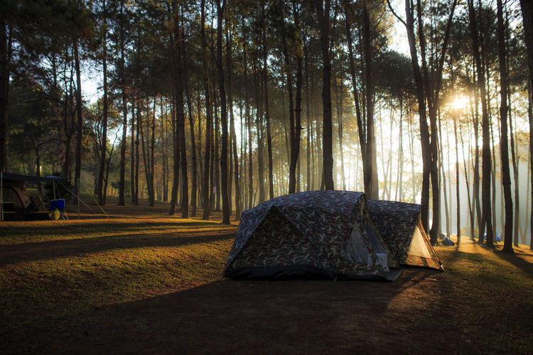 Tent in forest against sky