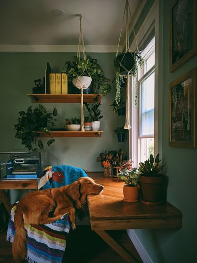 Man and dog on table at home