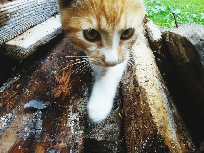 Pets One Animal Whisker Portrait Day No People Cat♡ Wood
