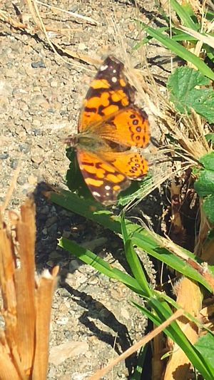 Butterfly ❤ Naturerox Taking Photos Insect Photography Thingsthatbugme Summertime Sun&done Treethugger