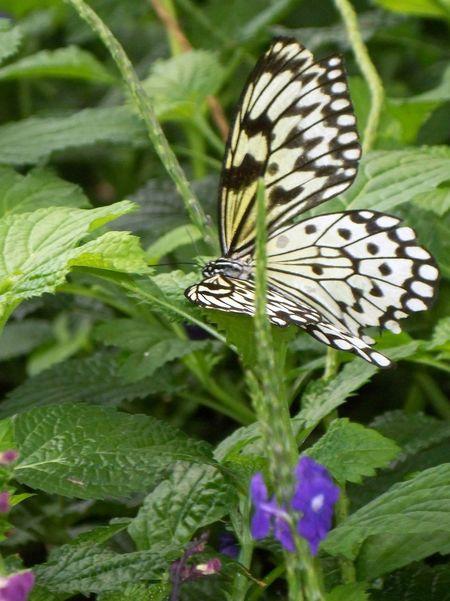 Impending Summer Butterflies And Flowers Butterflies
