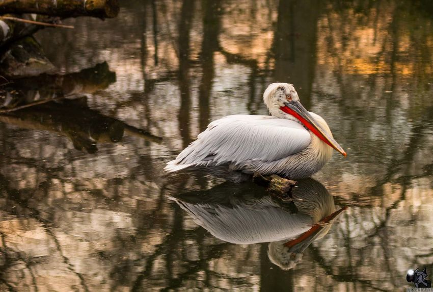 Animal Themes Animal Wildlife Animals In The Wild Beauty In Nature Bird Day Lake Nature No People One Animal Outdoors Reflection Tree Water