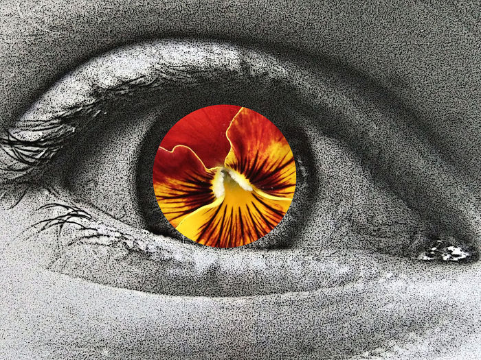 Abstract Photography Collage Looking At Camera Seeing the Sights Abstract All-seeing Eye Blackandwhite Close-up Colour Eyelashes Eyelid Eyes Face Fierce Fire In Her Eyes Flower Gaze Impact Isolated Color Looking Piercing Stare Seeing Staring At Me Watching Window To The Soul