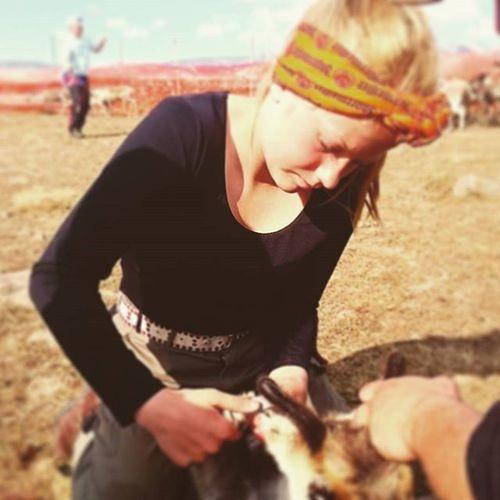 Nextgen is making her mark on a Reindeer Sapmi Oviksfjällen Bartjan @johanssonpeder @benita.lindholm @kunglix