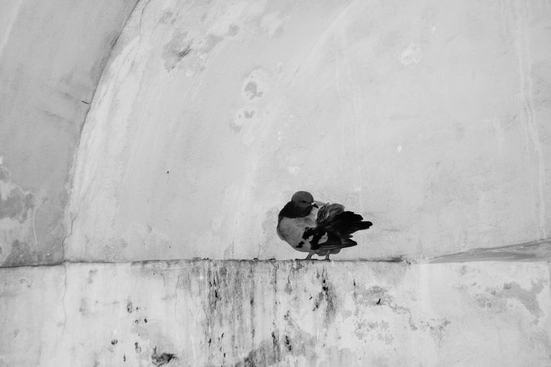 Bird Bird Photography Birds Of EyeEm  Black And White Black And White Photography Blackandwhite Church Croatia Croatia ♡ Deterioration Inside Inside Church Nature Nature In The City Nature On Your Doorstep No People Pigeon Pigeon Bird  Pigeons Taking Photo Taking Photos Taking Pictures Wall - Building Feature Zadar Zadar,Croatia