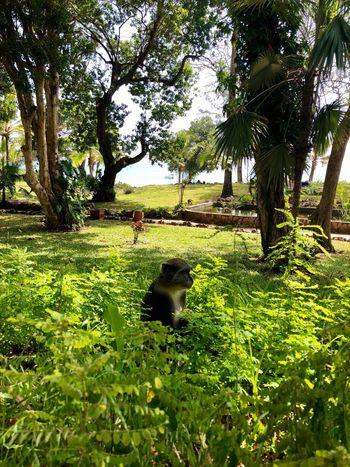 Animal Themes Tree Domestic Animals Mammal Green Color Growth One Animal