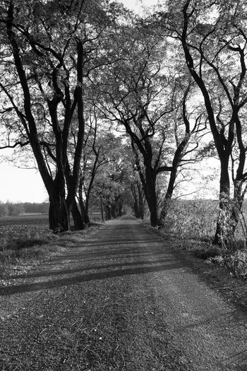 Road amidst trees on field