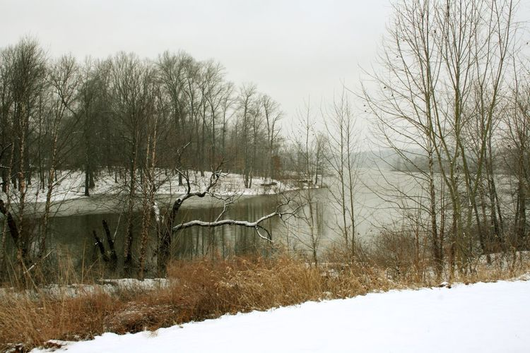 Paynetown, Monroe Lake, Indiana Lake Monroe Lake Snow Wood Forest Water Waterfront Winter Cold Temperature Tree Plant Nature Bare Tree No People Day White Color Land Beauty In Nature Animal Tranquility Scenics - Nature Tranquil Scene Non-urban Scene Field Vertebrate Outdoors