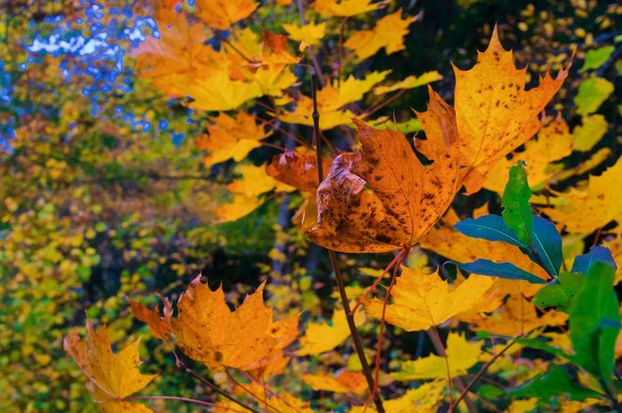 Autumn Colors Autumn Autumn Colors Autumn Leaves Leaves🌿 Beauty In Nature Day Forest Landscape Nature No People Outdoors