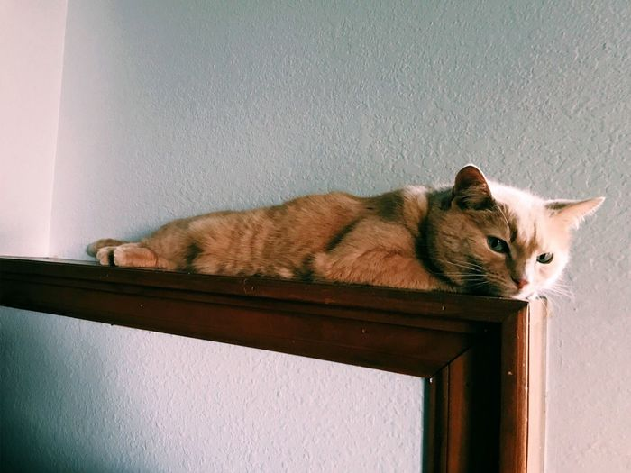 just chilling out! Animal Themes Domestic Cat One Animal Domestic Animals Pets Mammal Feline Cat No People Indoors  Day Close-up Geometric Accent Minimal Minimalism Everyday Tabby Cat Simple Simplicity Accents New Account Simple Moments