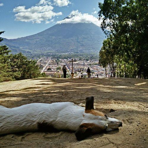 This cute Perrito was dozing off in the heat. Vscocam Cerrodelacruz AntiguaGuatemala antigua Guatemala centralamerica volcandelagua dogsofig
