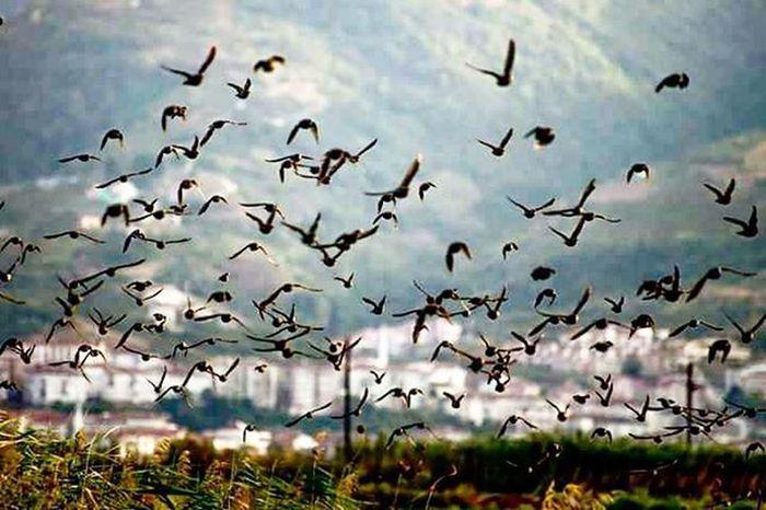 Kuşlar uçmayı unutmaz. İsmail Balı © 2015 Ismailbalıphotography Moment O_an Fly Bird Birds Sigircik Ornito Ornitology City Instalike Instagood Instadaily VSCO Vscocam Vscogood Vscolover Gununfotografi Gununkaresi @natgeo @natgeoturkiye @natgeotravel @thephotosociety @natgeocreative @natgeoyourshot