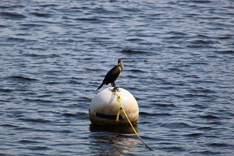 Bird floating.