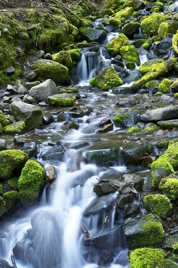 Small Mossy Mountain Stream of Pacific Northwest. Washington State, USA Northwest Washington Urban Skyline Forest Mountain Stream Water Long Exposure Rock Motion Flowing Water Scenics - Nature Beauty In Nature Solid Rock - Object Blurred Motion Waterfall Flowing Nature No People Moss Plant Day Land Stream - Flowing Water Outdoors Falling Water Purity Power In Nature