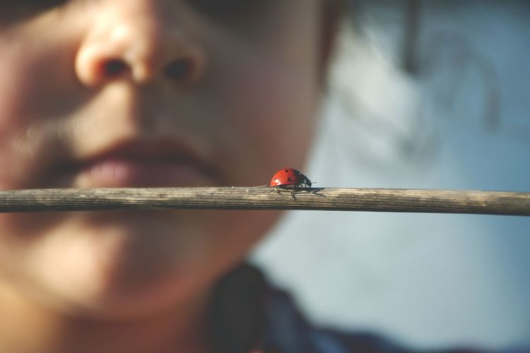 Cropped Image Of Girl With Ladybug On Stick