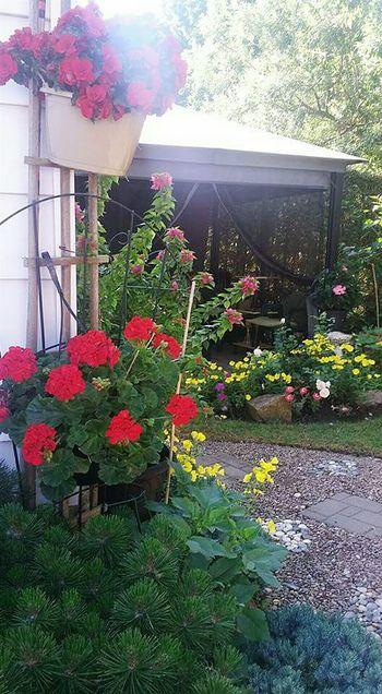 Plants Red Green Color Flowers Sunray Gardening Backyard Patio Yellow Flowers