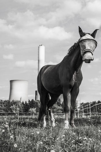 Industry Meadow Flowers Day Domestic Domestic Animals Fly Mask Frog View Horse Industrial Landscapes Land Livestock Meadow Nature One Animal