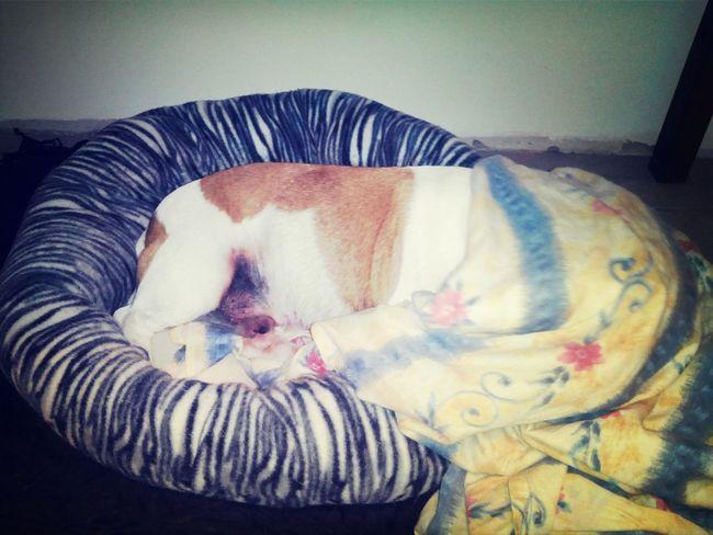 My dog sleeps. I Love My Dog My Dogs Are Cooler Than Your Kids Sleeping Dodo