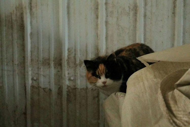 Mama Cat Pets Corner