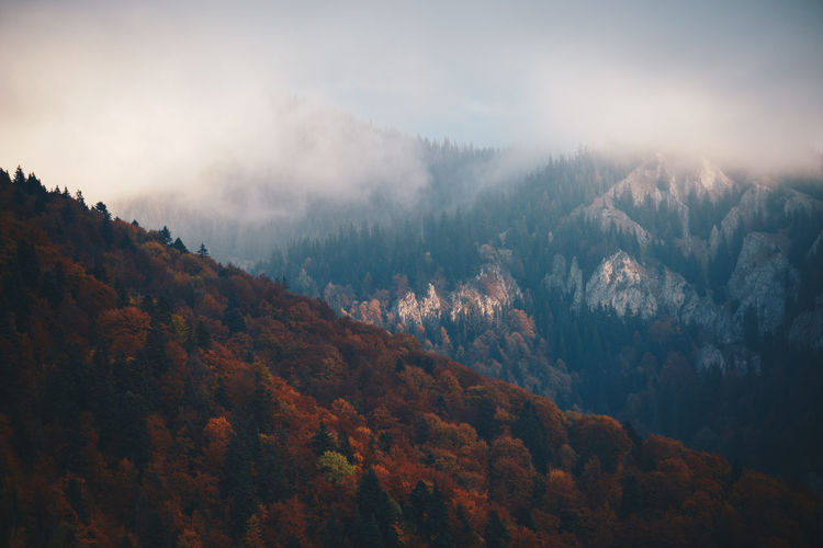 Scenic view of autumn trees on mountain in foggy weather