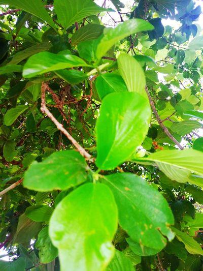 Leaf Sunlight