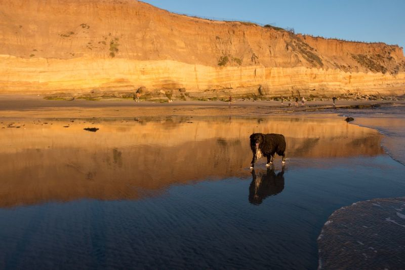 Reflection of man on horse in water