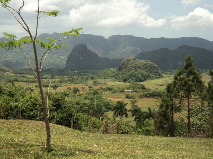 Cuba Vinales Cuba Tree Nature Landscape Without Filters Cuban Nature Miles Away This Is Latin America