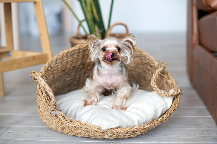 Portrait of dog sitting on wicker basket