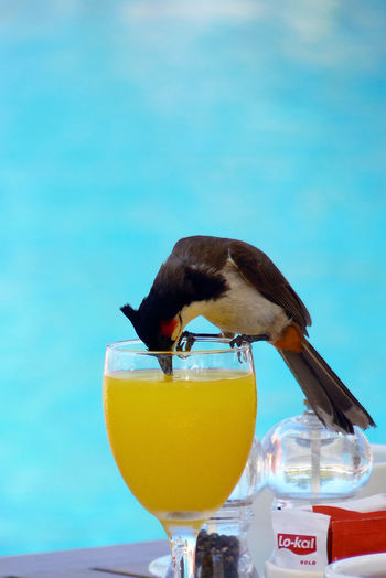 Close-up of bird perching on a glass