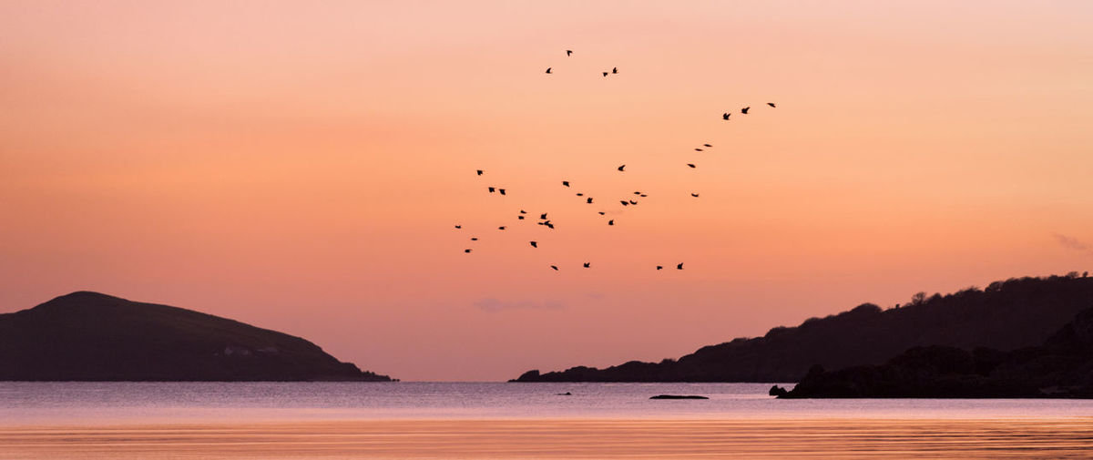 883 - 20170104 Rockcliffe Animal Animal Themes Animal Wildlife Animals In The Wild Beauty In Nature Bird Flock Of Birds Flying Group Of Animals Large Group Of Animals Mountain Nature No People Outdoors Rockcliffe Scenics - Nature Sea Silhouette Sky Sunset Vertebrate Water
