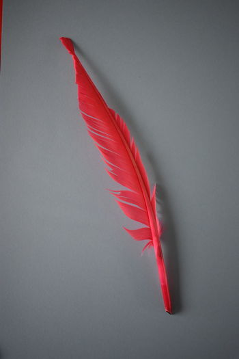 Colors Red Contrast Feather  Feather_perfection Grey Grey Background Red Color Red Feather Visual Creativity