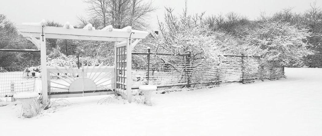 Winter Wonderland ❄ Snow Cold Temperature Nature Day No People Gate Fence Garden Frozen Trees