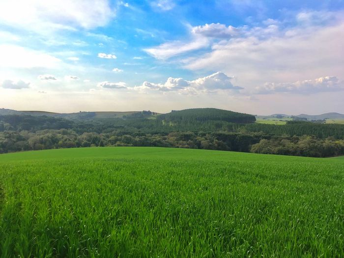 Countryside Agriculture Field Landscape Growth Nature Farm Sky Beauty In Nature Crop  Green Color Rural Scene Grass Cultivated Land Tranquil Scene Cloud - Sky Tranquility