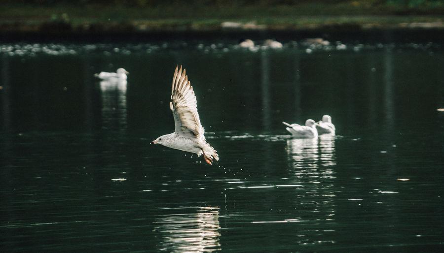 Birds Flying Over Water