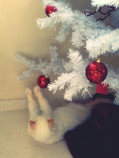 Merry christmas!!! Christmastime Navidad 2013 Happy New Year 2014 Sweet Babycat