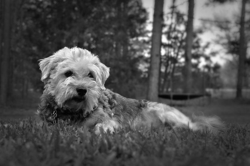 Eye4photography  Black And White Black & White Portrait Photography Photooftheday