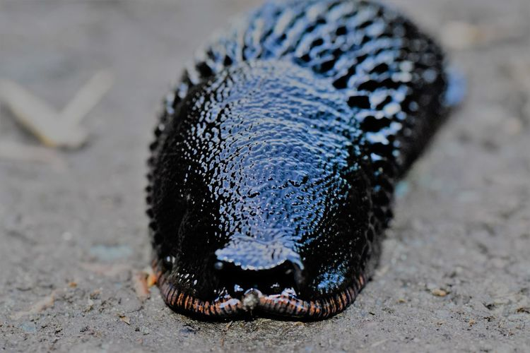 Close-up of slug