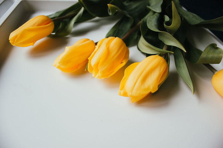 High angle view of orange roses on table