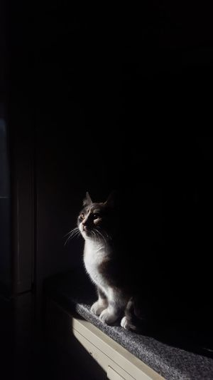 lightning cat Perfection Pose Cat Light Shadow Sunset Cat Power Contrary Perspective Nature Feline Pet Cute Pets Animal Samsung PhonePhotography Phone Camera Dark Dark Black Background Black Color Loneliness Females Beauty