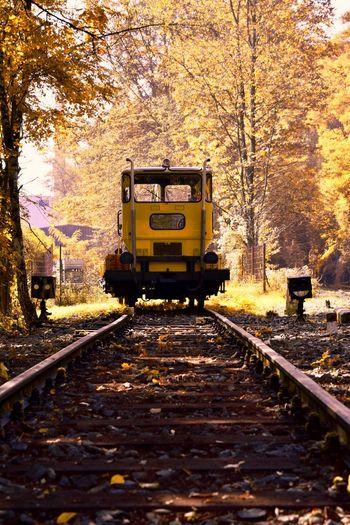 Autumn Day Land