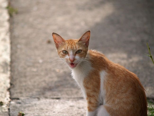 Cat No Filter Animals Looking At Camera Close-up Ginger Cat Feline Teeth