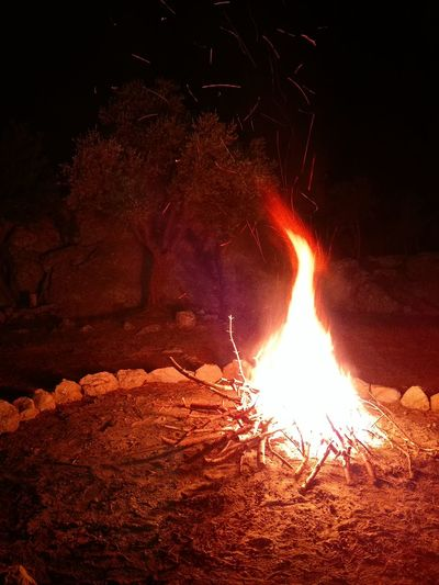Camp Red Night Flame Illuminated Outdoors Beauty In Nature Burning Firewood Camping Olive Tree