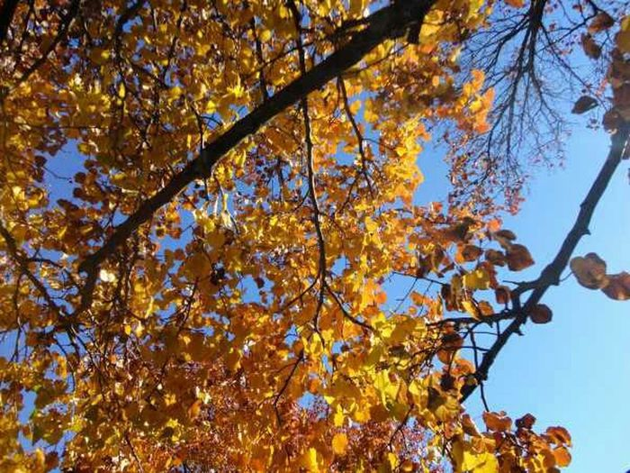 Nature Trees Leaves Autumn Fall Naturehippys Best Of Fall