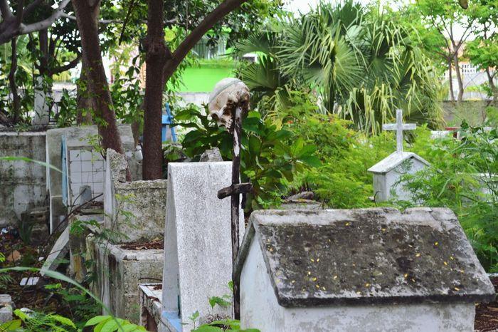 Tombstone Cemetery No People Grave Memorial Calavera  Cráneo Muerte Cementerio