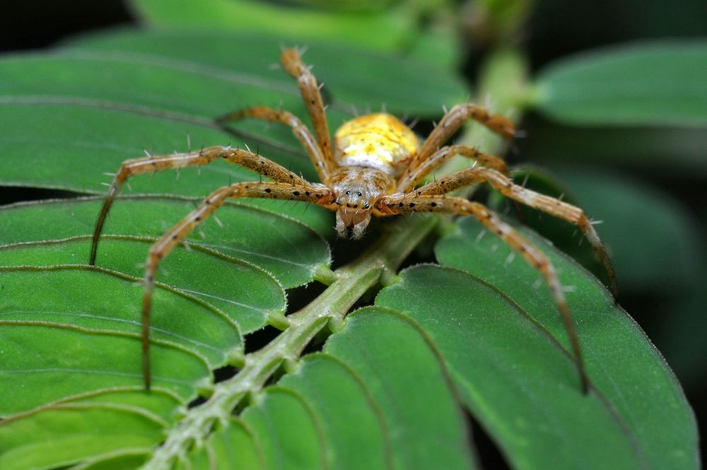 Spider Animal Spider Nature Macro Anthropoda Leaf Green Wildlife Closeup No People