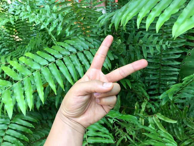 Human Hand Human Body Part Green Color Human Finger Growth Leaf Plant