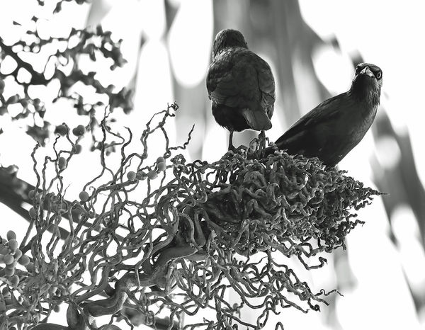 Watch your back Life Looking At Camera NeverLookBack Animal Themes Beauty In Nature Bird Black Black And White Lifeisbeautiful