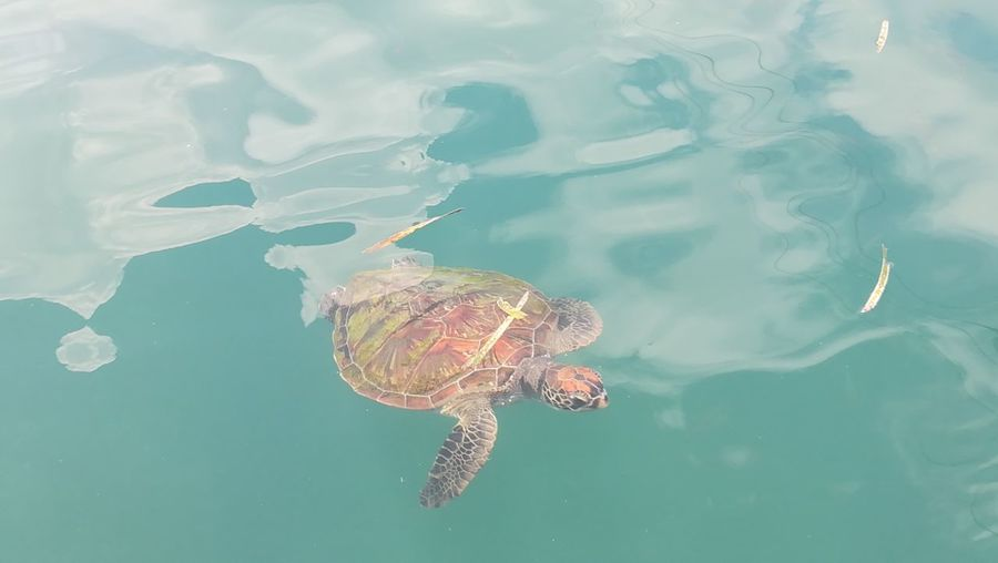 Turtle at