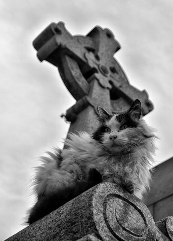 Lord of the Heights. Cementerio de la Recoleta, Buenos Aires, Argentina. 8.7.2016 Animal Animal Photography Art Black & White Black And White Blackandwhite Cat Cemetery Close-up Cloud Cloud - Sky Low Angle View No People Outdoors Recoleta Bs.As. Argentina Recoleta Cemetery Sculpture Sky Statue