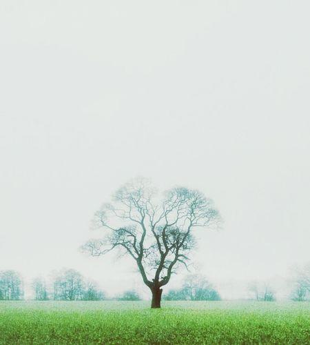 Bare Tree Single Tree Tree Field Fog Branch Winter